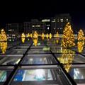 オアシス21:今年のクリスマスイルミネーションは沢山のツリーが並ぶ「ウォーターツリークリスマス」- 18