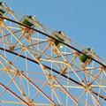 愛・地球博記念公園の大観覧車 - 7:真下から見た点灯直後のイルミネーション
