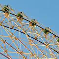 愛・地球博記念公園の大観覧車 - 8:真下から見た点灯直後のイルミネーション