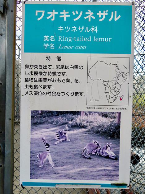 日本モンキーセンターの「WAOランド」- 6:説明