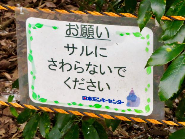 日本モンキーセンター「リスザルの森」- 11:注意書き