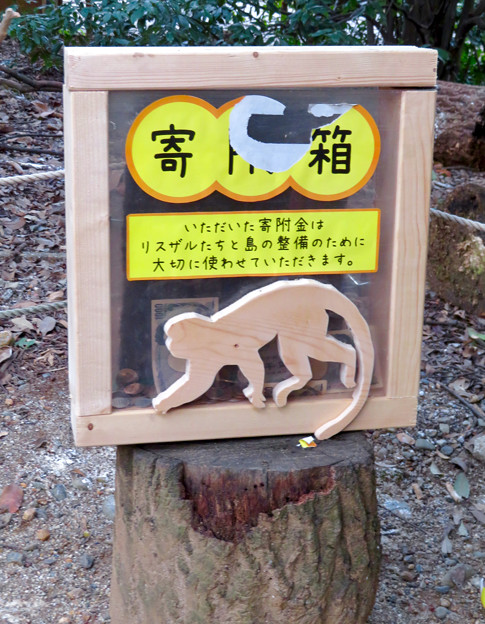 日本モンキーセンター「リスザルの森」- 13:寄附金用の箱