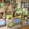 Photos: 日本モンキーセンター「ビジターセンター」 - 8:色んな猿の剥製