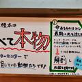 Photos: 日本モンキーセンター「ビジターセンター」 - 14:展示中の剥製は元は全てモンキーセンター飼育の猿!