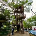 Photos: 日本モンキーセンター「Kids Zoo」 - 6:ツリーハウス