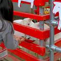 Photos: 日本モンキーセンター「Kids Zoo」 - 8:ヤギ