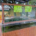 Photos: 日本モンキーセンター「Kids Zoo」 - 15:亀
