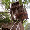 Photos: 日本モンキーセンター「Kids Zoo」 - 11:ツリーハウス