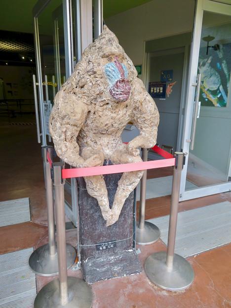 日本モンキーセンターの「アフリカセンター」No - 7:入り口にあるマンドリルの像