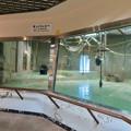 Photos: 日本モンキーセンターの「アフリカセンター」No - 11:チンパンジー舎