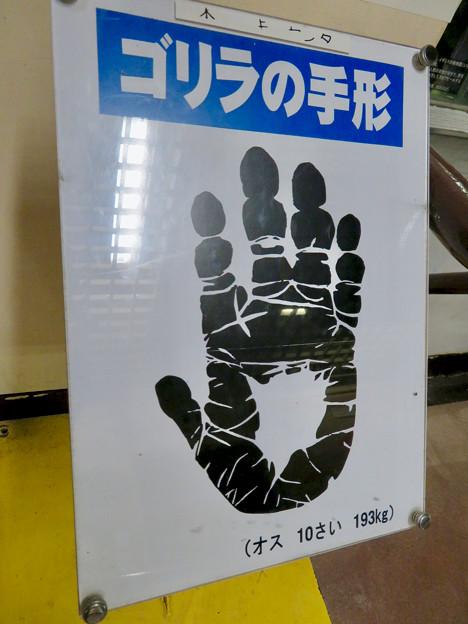 日本モンキーセンターの「アフリカセンター」No - 20:ゴリラの手形