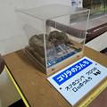 Photos: 日本モンキーセンターの「アフリカセンター」No - 23:ゴリラのうんち