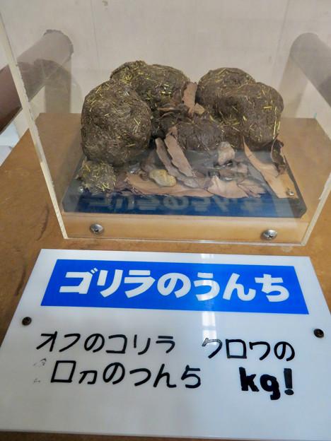 Photos: 日本モンキーセンターの「アフリカセンター」No - 24:ゴリラのうんち