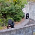 Photos: 日本モンキーセンターの「アフリカセンター」No - 28:建物外側を歩くチンパンジー