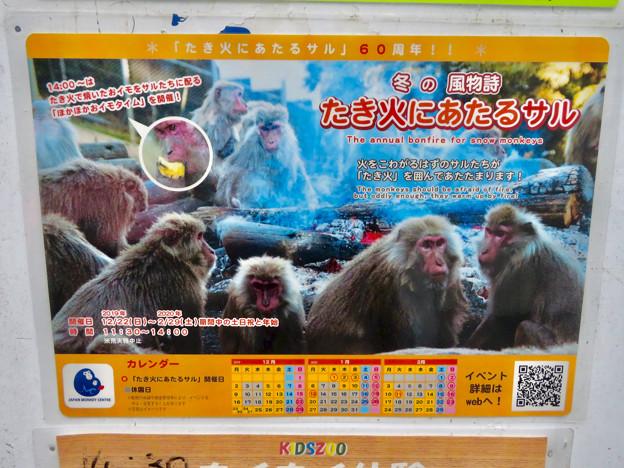 日本モンキーセンター No - 2:焚き火にあたる猿のポスター