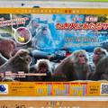 Photos: 日本モンキーセンター No - 2:焚き火にあたる猿のポスター