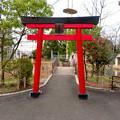 Photos: 日本モンキーセンター No - 9:夜猿神社