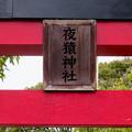 Photos: 日本モンキーセンター No - 10:夜猿神社