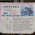 Photos: 日本モンキーセンター No - 28:シロテナガザルの説明