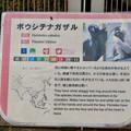 Photos: 日本モンキーセンター No - 33:ボウシテナガザルの説明