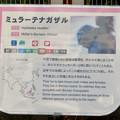 Photos: 日本モンキーセンター No - 34:ミューラーテナガザルの説明