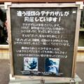Photos: 日本モンキーセンター No - 35:違う種類のテナガザルが同居!