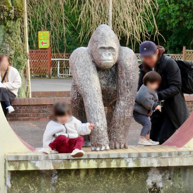 日本モンキーセンター No - 41:ゴリラの像