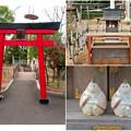 Photos: 日本モンキーセンター No - 53:夜猿神社