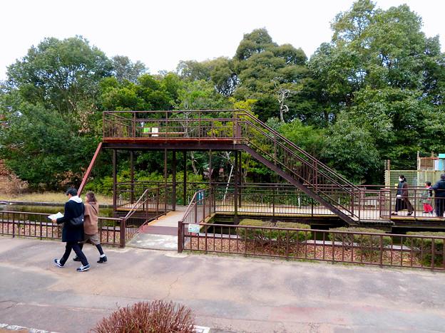 日本モンキーセンター「リスザルの森」の高所観察スペース - 1