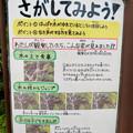 Photos: 日本モンキーセンター「リスザルの森」の高所観察スペース - 4:観察ポイントの説明