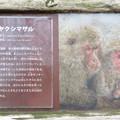 Photos: 日本モンキーセンター:ヤクザルの説明