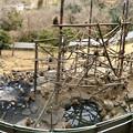 日本モンキーセンター「モンキーバレイ」のパノラマ