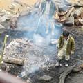 Photos: 日本モンキーセンター:焚き火にあたる猿 - 2(消火作業中)