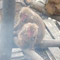Photos: 日本モンキーセンター:焚き火にあたる猿 - 7