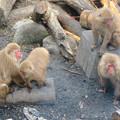 Photos: 日本モンキーセンター:焚き火にあたる猿 - 20