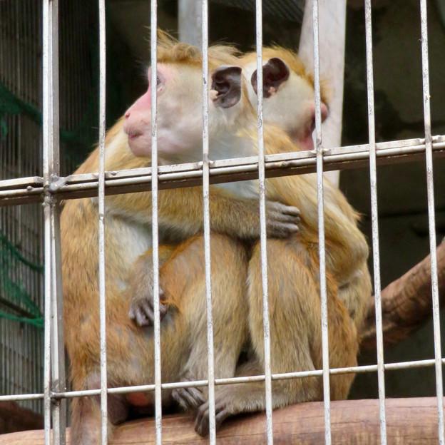 寒そうに抱き合ってたモンキーセンターのトクモンキー - 2