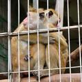 Photos: 寒そうに抱き合ってたモンキーセンターのトクモンキー - 2