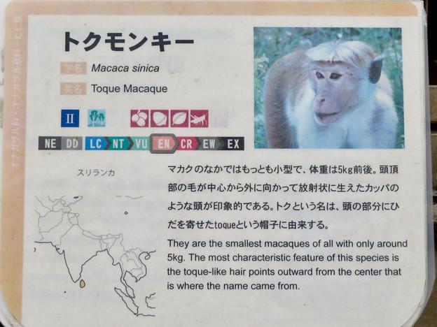 日本モンキーセンター:トクモンキーの説明