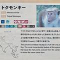 Photos: 日本モンキーセンター:トクモンキーの説明