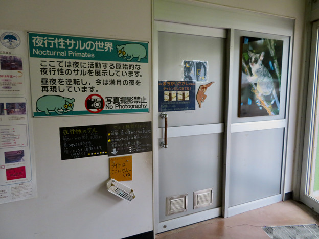 日本モンキーセンター アフリカセンター「夜行性サルの世界」- 1
