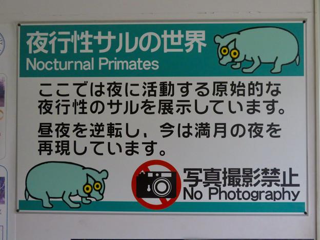 日本モンキーセンター アフリカセンター「夜行性サルの世界」- 2:撮影禁止の注意書き