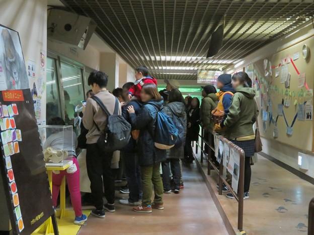 日本モンキーセンター:ゴリラの食事風景を見ている人たち - 1