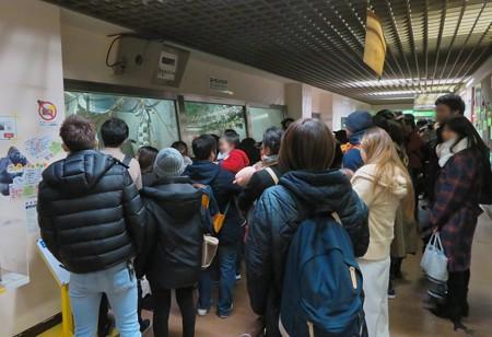 日本モンキーセンター:ゴリラの食事風景を見ている人たち - 2