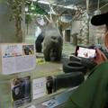 Photos: 日本モンキーセンター:ゴリラの食事風景を見ている人たち - 4