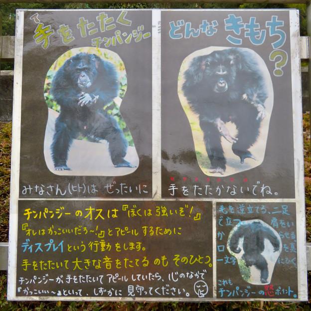 日本モンキーセンター:チンパンジー - 8(手を叩くなと言う注意書き)