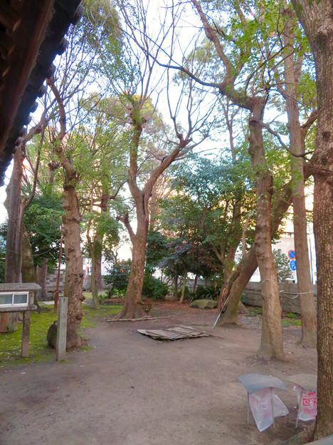 椿神明社 - 18