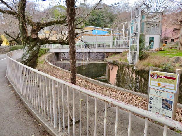 東山動植物園のライオン舎 - 1