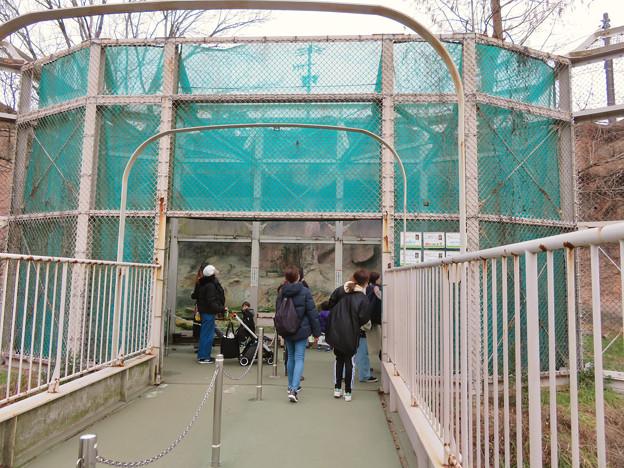 東山動植物園のライオン舎 - 2