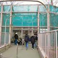 Photos: 東山動植物園のライオン舎 - 2