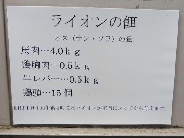 Photos: 東山動植物園のライオン舎 - 3:ライオン(オス)の餌